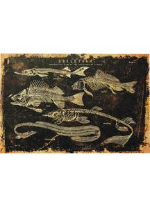 Fish Canvas Frame