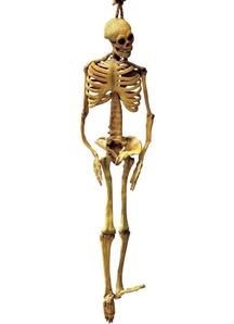 Latex Skeleton