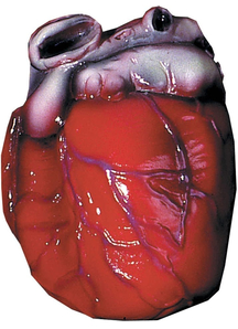 Realistic-Looking Heart