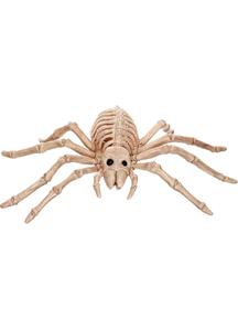 Spider Form Skeleton